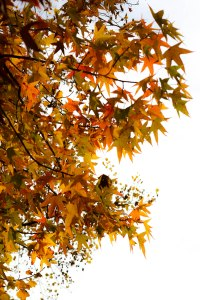 PS_MG_4393 (1 of 1)