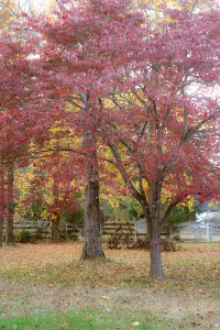 PS_MG_4408 (1 of 1)