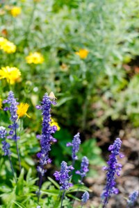 PS_MG_6492 (1 of 1)