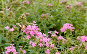 PS_MG_6767 (1 of 1)